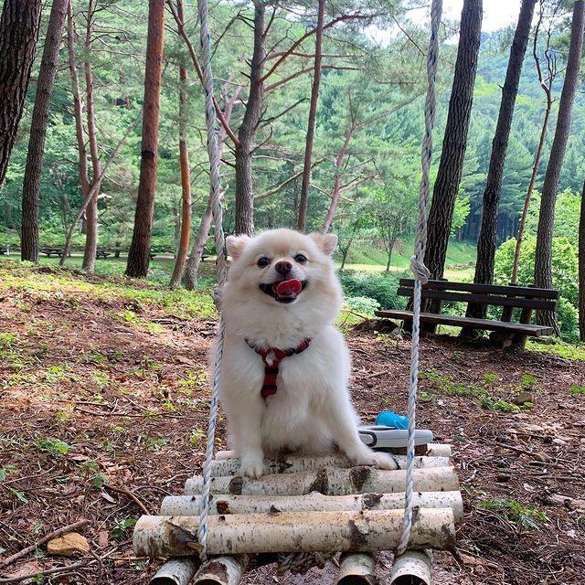 댕댕이와 함께 가을 숲 힐링! '국립자연휴양림' BEST 4